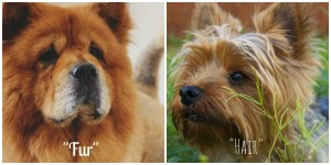 Fur vs Hair