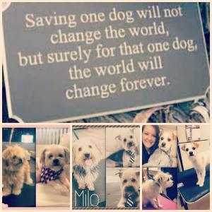 Angels, Rescue, dog rescue, animal rescue